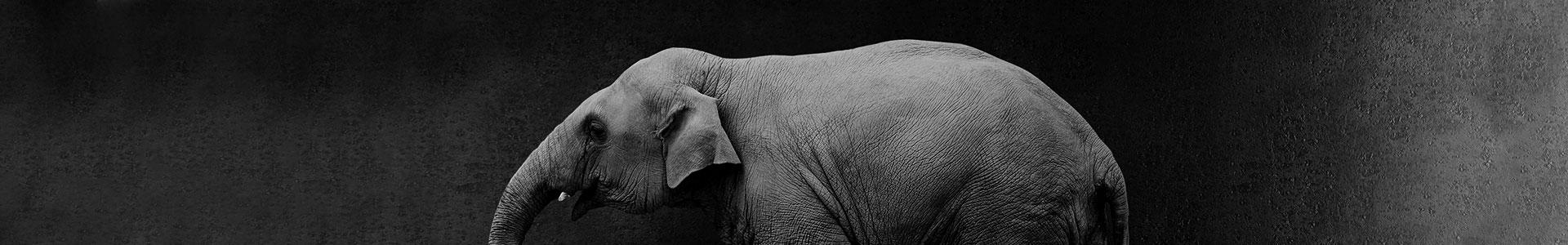 Webinar-Paul_Matthews-1920x300